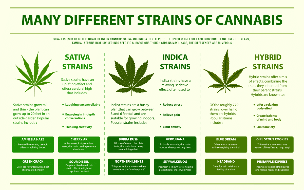 Indica vs Sativa: Understanding the Difference